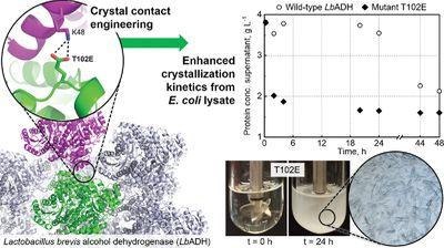 Crystal Contact Engineering Enables Efficient Capture and Purification of an Oxidoreductase by Technical Crystallization