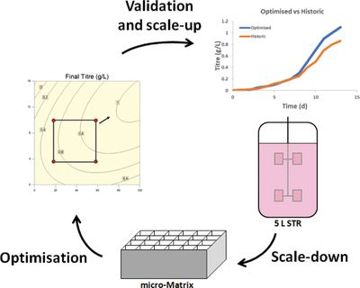 Equal mixing time enables scale‐down and optimization of a CHO cell culture process using a shaken microbioreactor system
