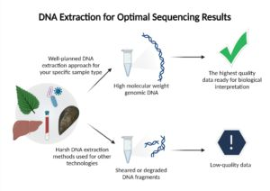 Sequencing 101: DNA Extraction - Tips, Kits, & Protocols