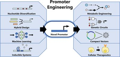 Advances in promoter engineering: Novel applications and predefined transcriptional control