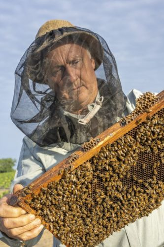Protecting honeybees from the Varroa destructor mite