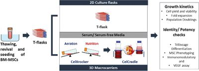 Optimization of culture conditions for human bone marrow‐derived mesenchymal stromal cell expansion in macrocarrier‐based Tide Motion system