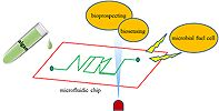 Applications of microfluidics in microalgae biotechnology: A review