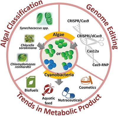 A Critical Review of Genome Editing and Synthetic Biology Applications in Metabolic Engineering of Microalgae and Cyanobacteria