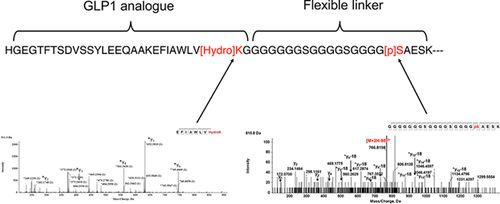Nutrient Optimization Reduces Phosphorylation and Hydroxylation Level on an Fc‐Fusion Protein in a CHO Fed‐Batch Process