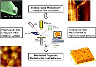 Atomic force microscopy studies of bioprocess engineering surfaces - imaging, interactions and mechanical properties mediating bacterial adhesion
