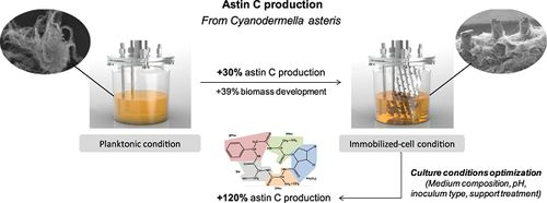 Astin C Production by the Endophytic Fungus Cyanodermella asteris in Planktonic and Immobilized Culture Conditions