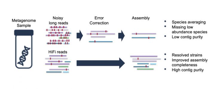 The HiFi Sequencing Advantage for Metagenome Assembly